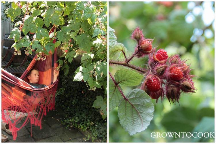 edible forest garden japanese wineberry