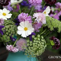 Seasonal bouquet - beautiful annuals