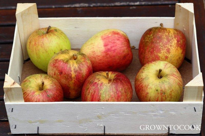 apple Groninger Kroon