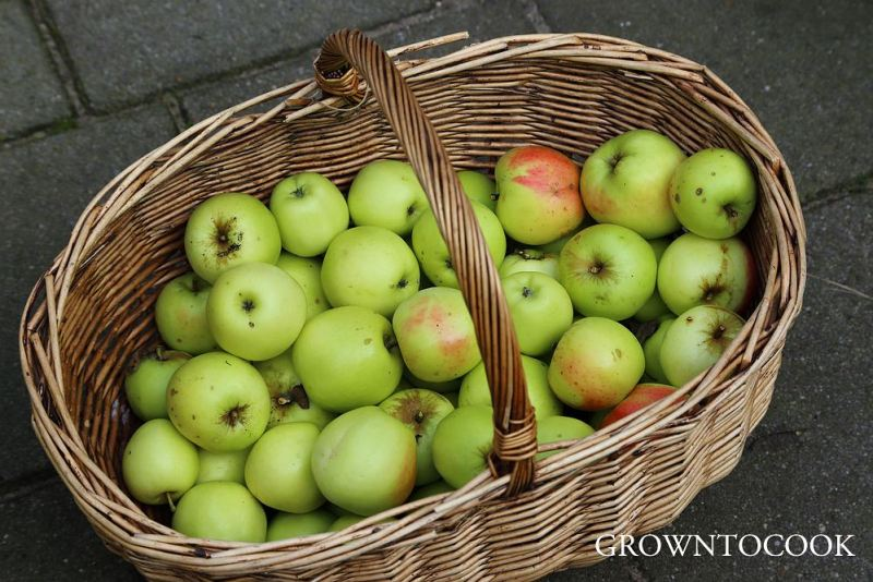 Manks Codlin apples