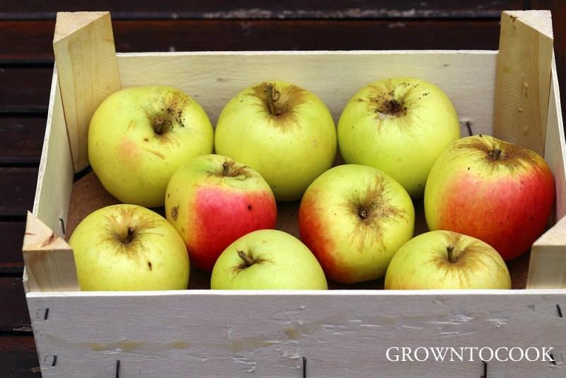 apple ManksCodlin