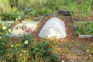 allotment in October