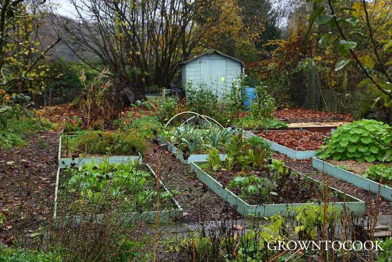 kitchen garden in november