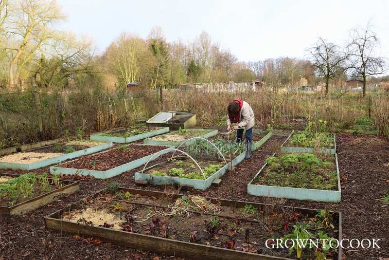 allotment in january
