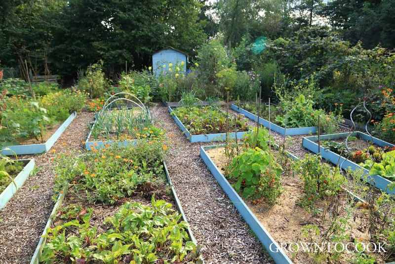 allotment 24th August