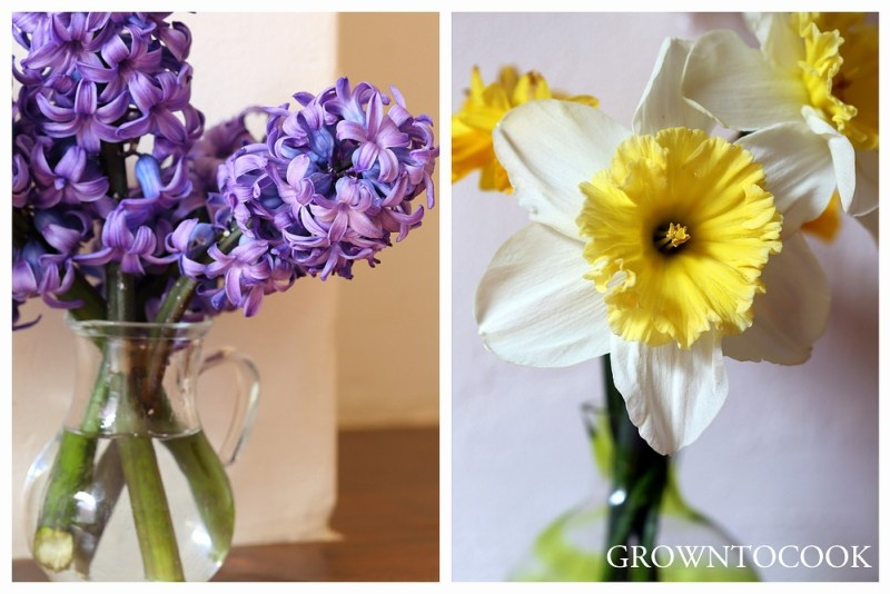 "hyacinth and narcissus ""Ice Follies"""
