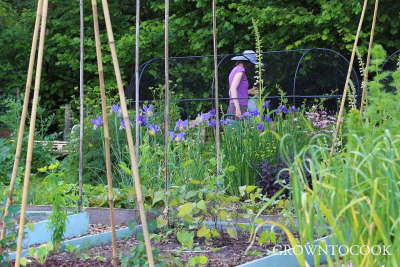 allotment in june