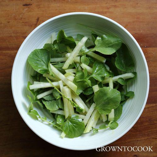 kohlrabi and land cress salad
