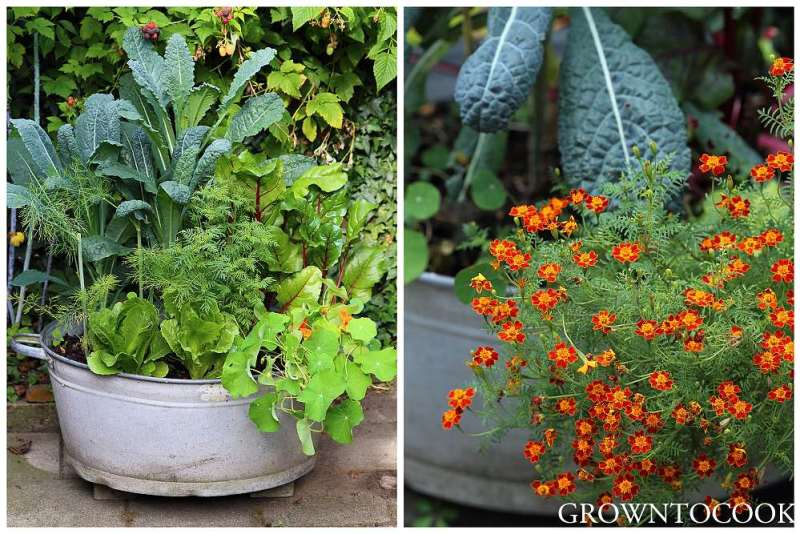 polyculture in a container-002