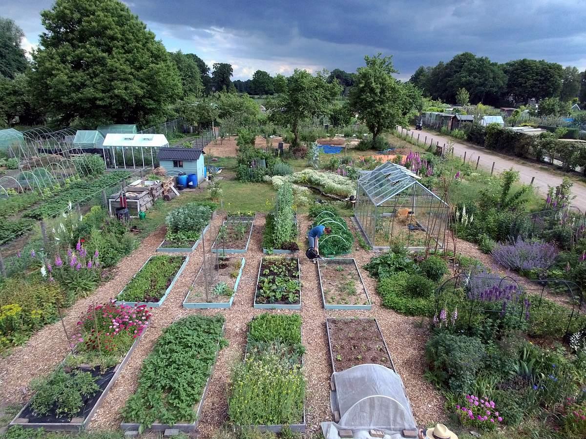 The garden in 2017