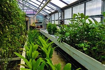 Frick Greenhouse