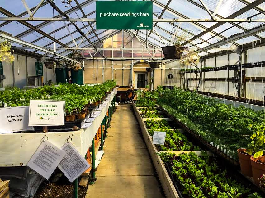 Seedling Sale 2019 - Grow Pittsburgh on green lavender, green gardening, green butternut squash, green beets, green bonsai, green tulips, green nature, green shrubs, green bushes, green perennial, green garden design, green flowers,
