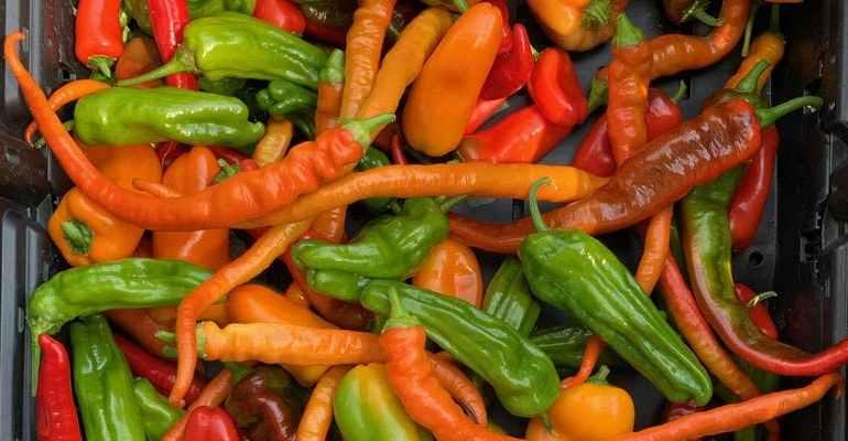 Backyard Farm School: Pepper School
