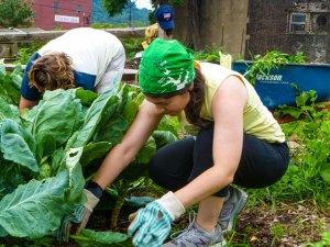 volunteer with grow pittsburgh