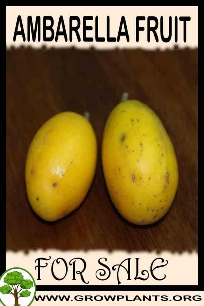 Ambarella fruit for sale