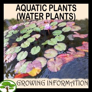 Aquatic- plants (Water plants)