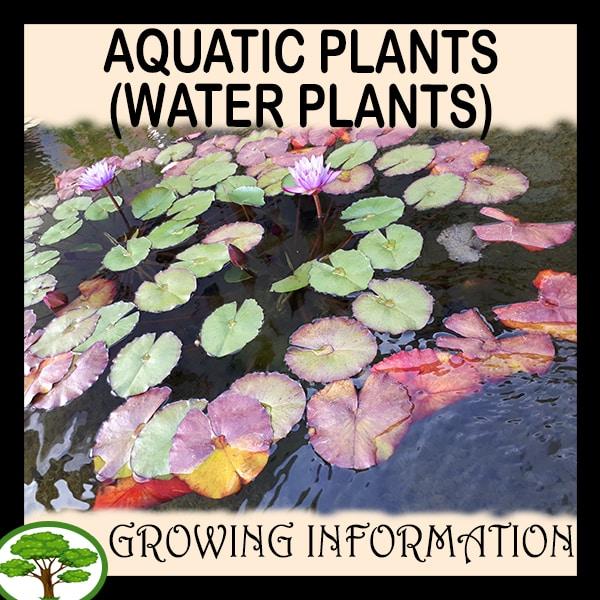 Aquatic- plants (Water plants)