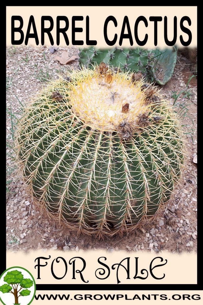 Barrel cactus for sale