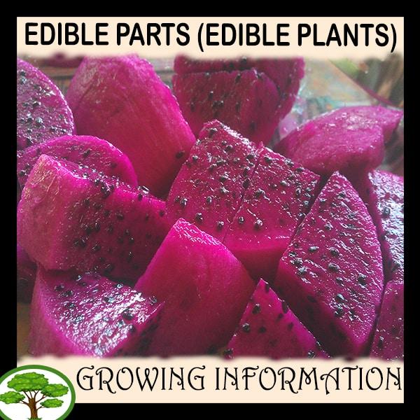 Edible Parts (Edible plants)