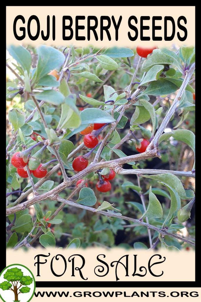 Goji berry seeds for sale