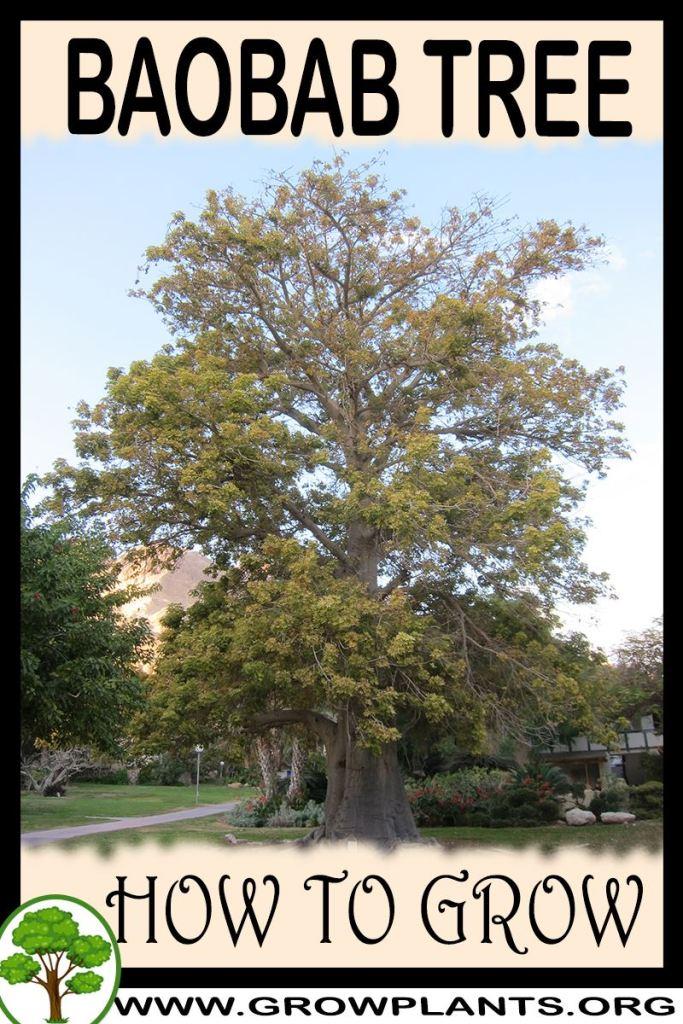 How to grow Baobab tree