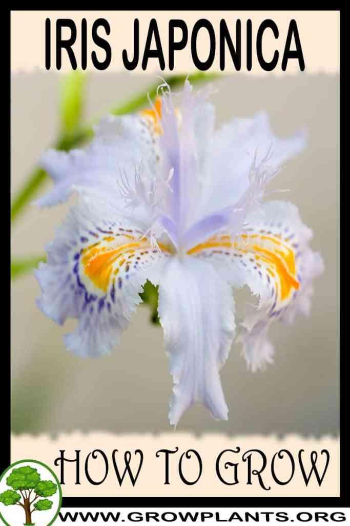 How to grow Iris japonica