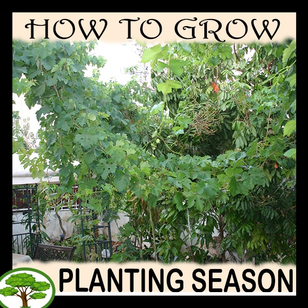 Planting season - all need to know