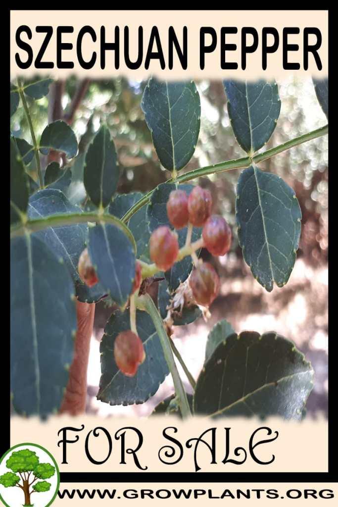 Szechuan pepper plants for sale
