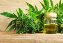 Óleo de cannabis medicinal rico em cbd, thc, thca e outros canabinoides
