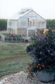 TLC Floral Greenhouse