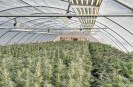 Grow Greenhouse with roll up side