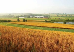 photo via agrinews-pubs.com