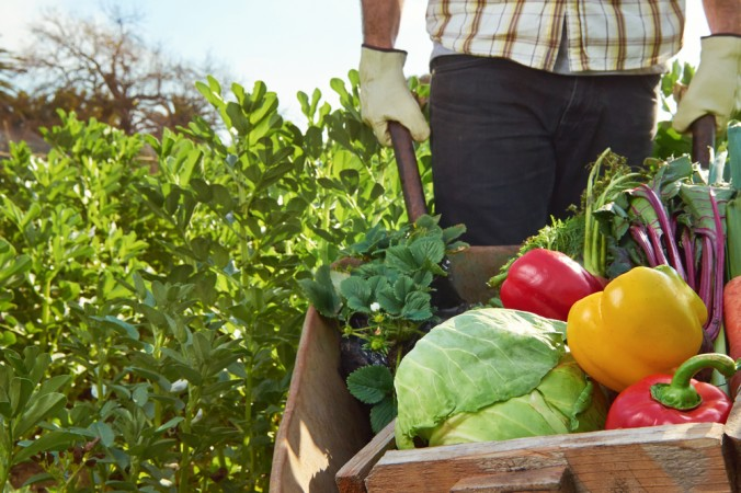 How Organic Farming Naturally Deters Pests Without Chemicals