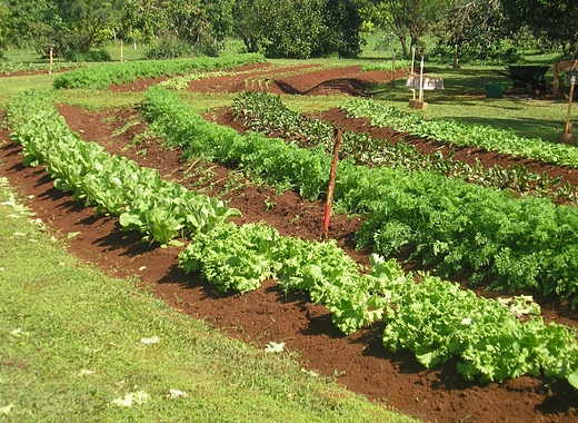 Yes, Organic Farming Can Feed the World
