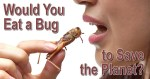 Would You Eat a Bug to Save the Planet?
