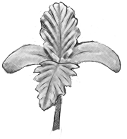 A cannabis seedling