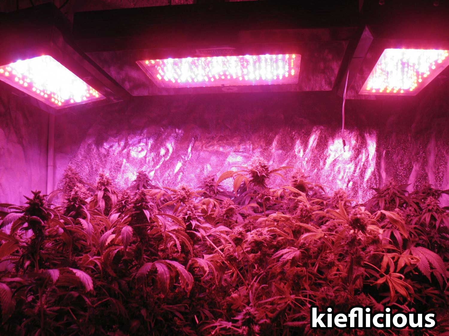 Best Led Weed Grow Light