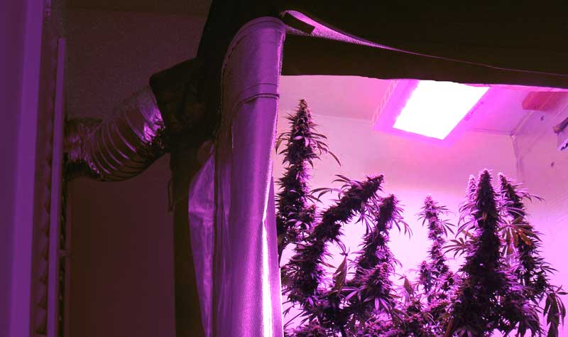 Best Led Lights Grow Weed