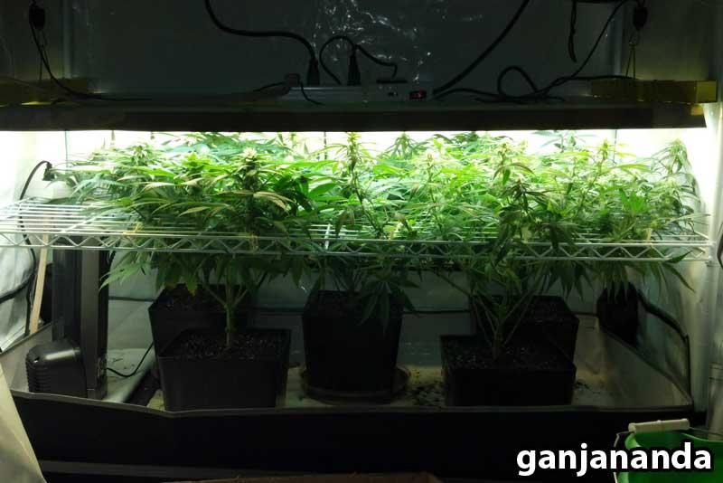 T5 Grow Lights Bulbs
