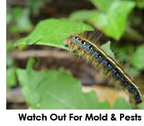 Always keep an eye out for any signs of mold, bugs, or other marijuana pests