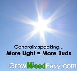 Generally speaking, more light is better for growing marijuana