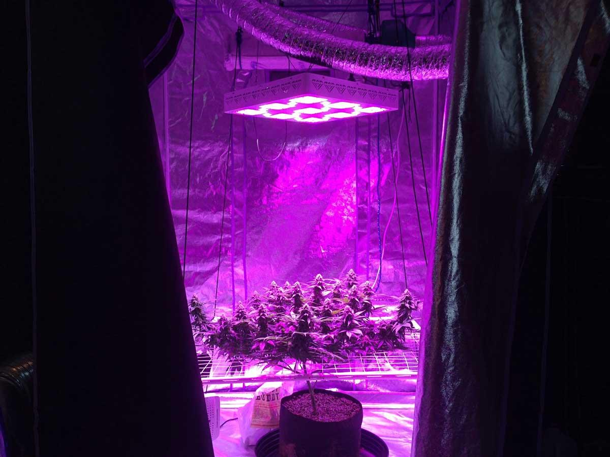 Can You Use Regular Led Lights Grow Lights