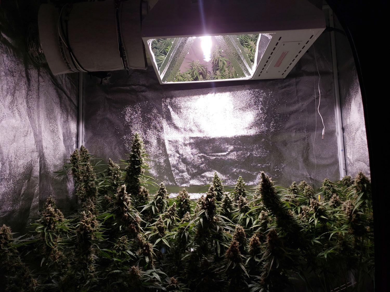 Lec Grow Light