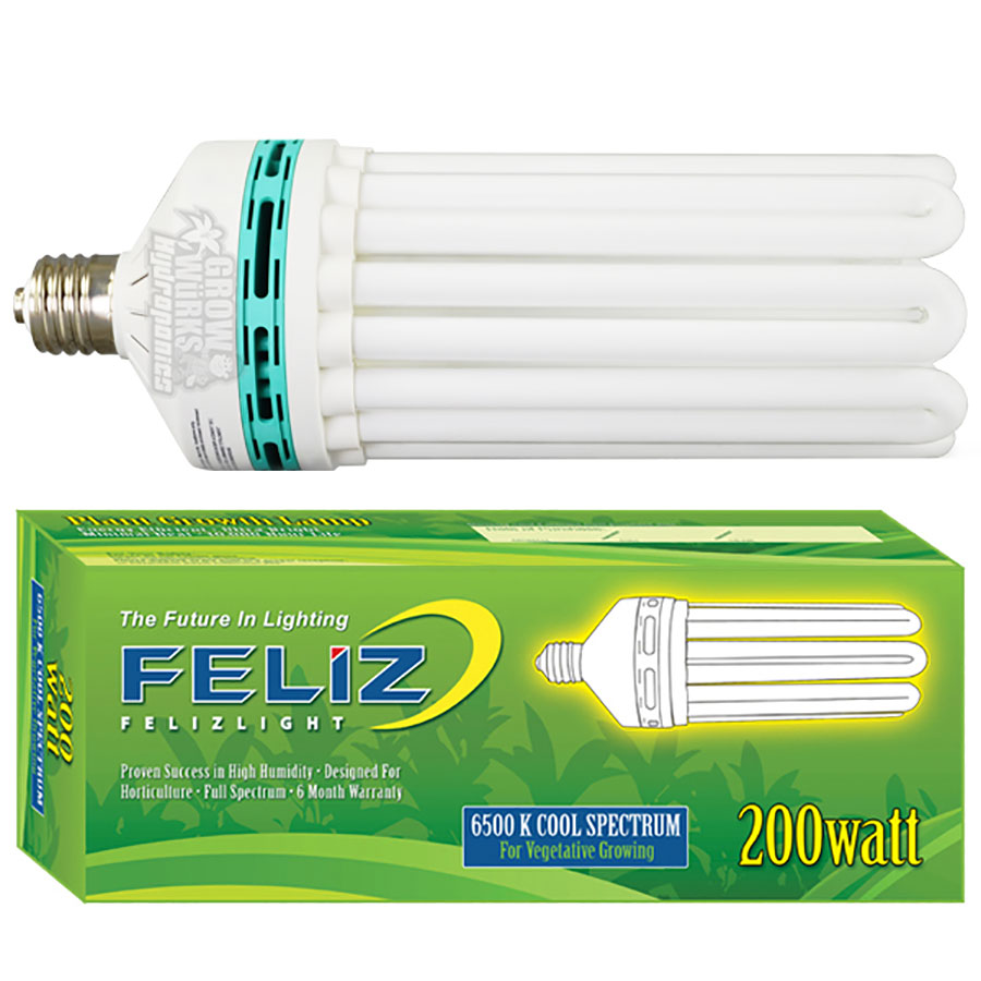 Feliz Light Bulbs