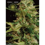 Super Skunk Auto Vision Seeds