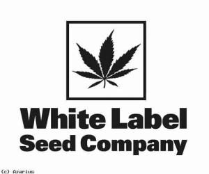 White Label - White Diesel Haze Auto 3