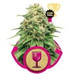 Critical Fem Royal Queen Seeds