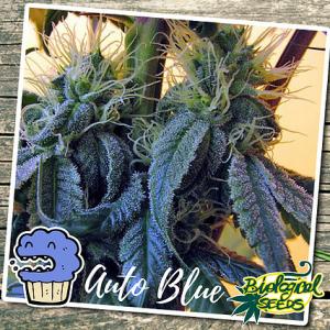Auto Blue Auto Biological Seeds