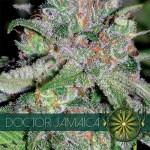 DOCTOR JAMAICA Fem