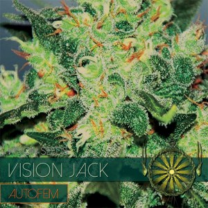 VISION JACK AUTO VISION SEEDS